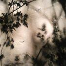 leaf silhouet by nutchip