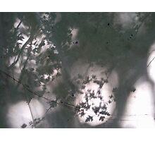 leaves silhouet Photographic Print