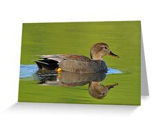 Gadwall, male Greeting Card