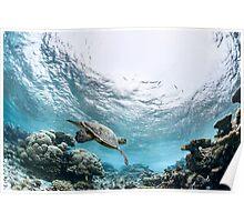 Sea Turtle - Maldives Poster
