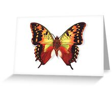 Butterfly Charaxes Species, Orange Greeting Card