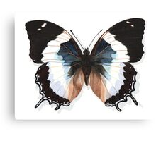 Butterfly Charaxes Species, Blue Canvas Print