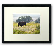 Buffalo Sunflowers Framed Print