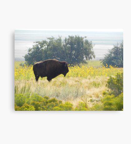 Buffalo Sunflowers Canvas Print