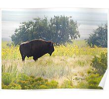 Buffalo Sunflowers Poster