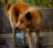 Reservior Dog by Patito49