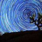 Stunning Circular Star Trails Above Joshua Tree Desert by Gavin Heffernan