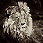 Male Lion by RatManDude