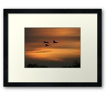 Silhouetted Sandhill Cranes Framed Print