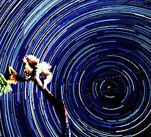 Epic Star Trails Vortex Over Joshua Tree. Polaris in Frame. by Gavin Heffernan