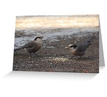 Canada Jays Greeting Card