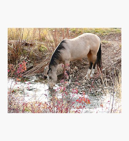 Horse Drink Photographic Print