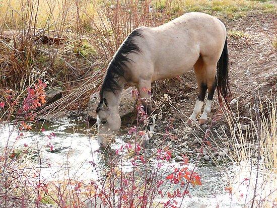 Horse Drink by BrianAShaw