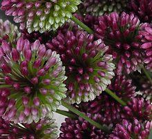 Purple Flowers by TCbyT