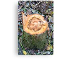 Close-up on a stump of a tree felled in the forest Canvas Print