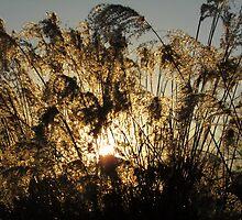 Sun Behind Weeds by rjonesphotos