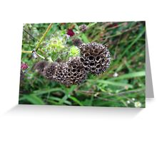 Sci-Fi seed pods Greeting Card