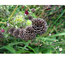 Sci-Fi seed pods Photographic Print