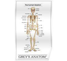 Grey's Anatomy-skeleton Poster