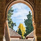Looking Out in Alhambra by Robert Kelch, M.D.