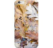Top view of a layer of fallen oak leaves iPhone Case/Skin