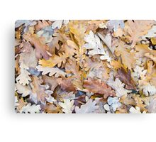 Top view of a layer of fallen oak leaves Canvas Print