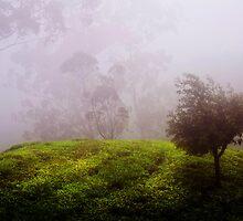 Ghost Tree in the Haunted Forest. Nuwara Eliya. Sri Lanka by JennyRainbow