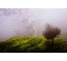 Ghost Tree in the Haunted Forest. Nuwara Eliya. Sri Lanka Photographic Print