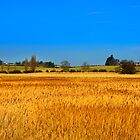 Reeds in the wind by simon17