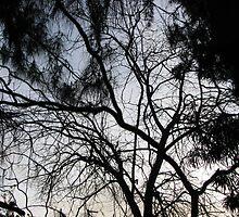 Branching Pathways by Chris Gudger