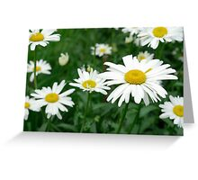 Daisies flowers Greeting Card