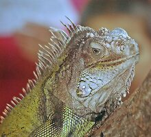 Iguana by scott staley