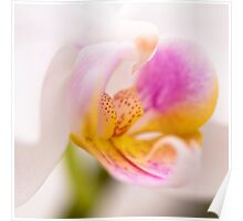 orchid impressions i Poster