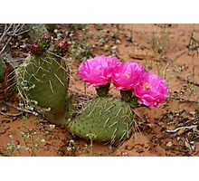 cactus in bloom Photographic Print