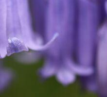 Blue bells by AriadneJones