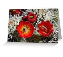 red cactus flower Greeting Card