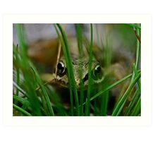Froglet Keeking Art Print