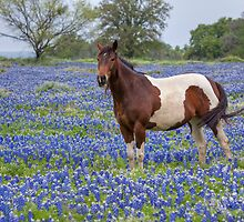 Horse in Texas Bluebonnets by RobGreebonPhoto