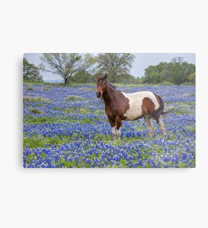 Horse in Texas Bluebonnets Metal Print