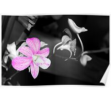Orchid in colosplash Poster