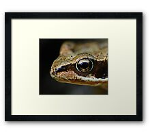 Froglet's Eye Framed Print