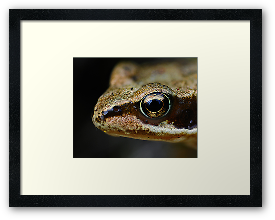 Froglet's Eye by George Crawford
