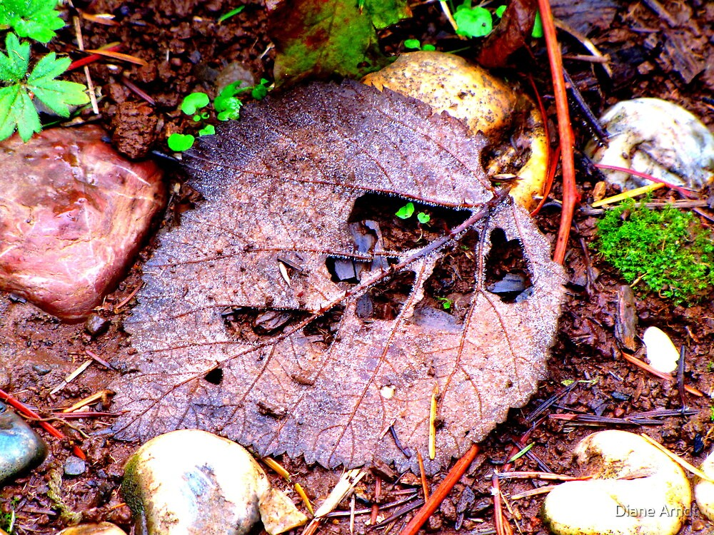 Leaf....Life Phases by Diane Arndt
