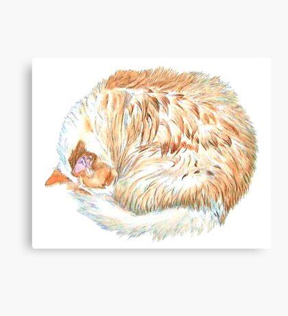 S.D. the Cat Canvas Print