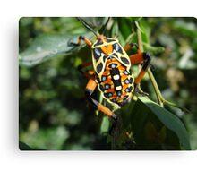 Colorful Bug - Escarabajo De Colores Canvas Print