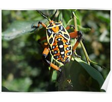 Colorful Bug - Escarabajo De Colores Poster