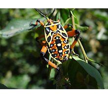 Colorful Bug - Escarabajo De Colores Photographic Print