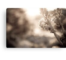White Snow Canvas Print