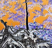 Driftwood in negative film effect by 242Digital