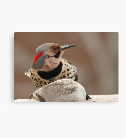 A Beautiful Visitor ~ Canvas Print